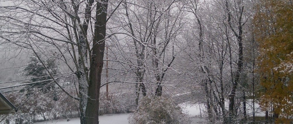 Snow falling over the land with trees in background